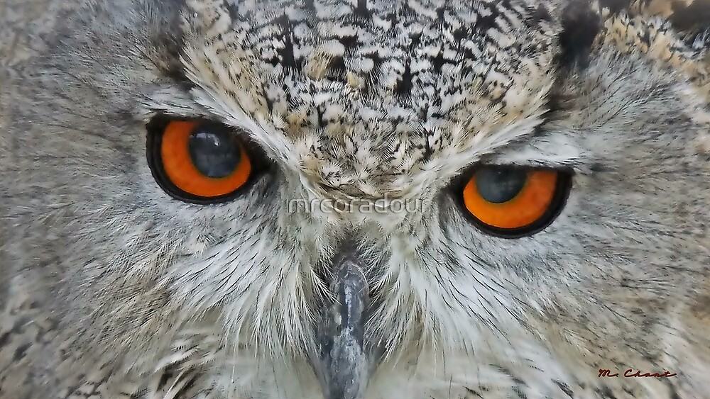 """"""" Eye'm watching you"""" by Malcolm Chant"""
