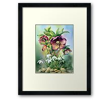 Snowdrops and Hellebores Framed Print