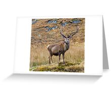 Impressive Antlers Greeting Card