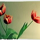 Red Tulips Polaroid by Reinvention