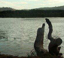 Still Day - Wonga Wetlands Albury by LindaBenson