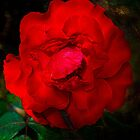 Red and Rosy by Elaine Teague