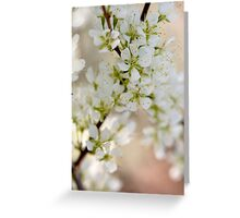 Found: Blossom Happy-ness Greeting Card