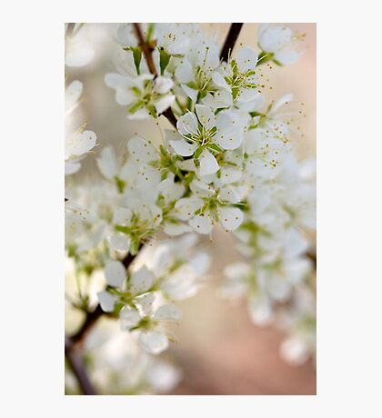 Found: Blossom Happy-ness Photographic Print