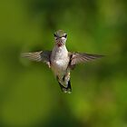 Humming Bird Checking Me Out by TJ Baccari Photography