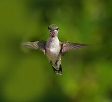 Humming Bird Checking Me Out by Photography by TJ Baccari