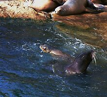 playful seals  by LisaBeth