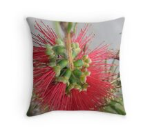 Red Bottlebrush Flower Throw Pillow