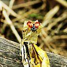 sweet ladybird by xxnatbxx