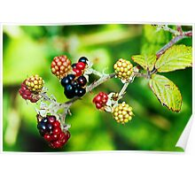 colourful fruitiness Poster