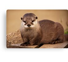 Terry the Otter Canvas Print
