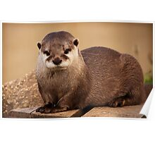 Terry the Otter Poster