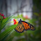 Monarch Breakfast by Judy Wanamaker