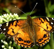 painted lady by Linda  Makiej