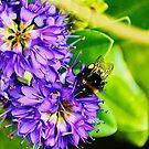 busy bee by xxnatbxx