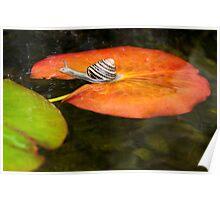 Snail on Lilypad Poster