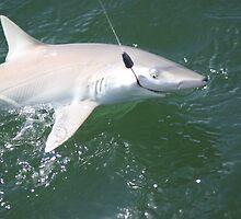 I'm Hooked! Blacknose Shark by Missy Yoder