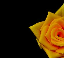 Hint of yellow  by Shubd