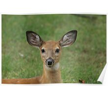 fawn portrait Poster