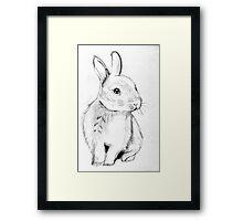 Bluebell the Fluffy White Bunny Framed Print