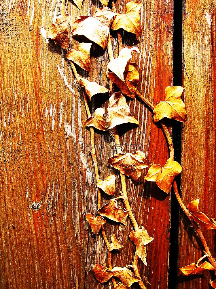 Old door & Ivy by buttonpresser