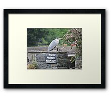 Herons Don't Read Framed Print