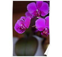 Pure Purple Brilliance  Poster