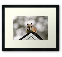Rooftop guest Framed Print