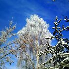 Trees in winter by Bonus