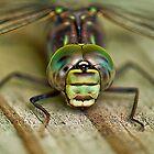 Dragonfly by Wanda Dumas