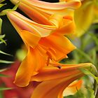 "Trumpet Lily ""African Queen"" by Michael Cummings"