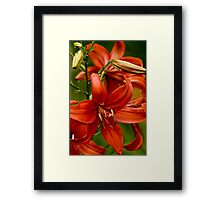 """Asiatic Lily """"Red Tiger"""" Framed Print"""