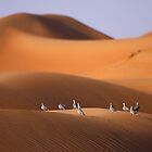 Doves on a Dune by David Clark