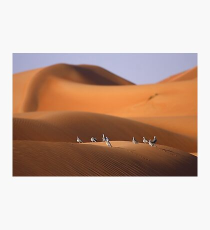 Doves on a Dune Photographic Print