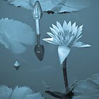Water Lily Dreams by ElyseFradkin