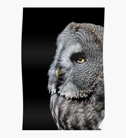 Great Grey Owl - (Strix nebulosa) Poster