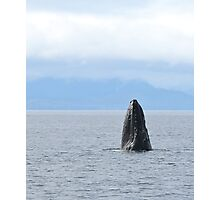 Spyhopping Humpback Photographic Print