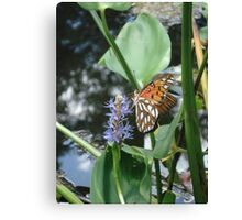 GULF FRITILLARY ON PICKEREL WEED Canvas Print