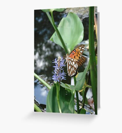 GULF FRITILLARY ON PICKEREL WEED Greeting Card