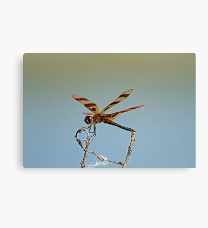 The Dragonfly Canvas Print