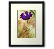 -Beautiful Lavender Cosmos Framed Print