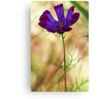 -Beautiful Lavender Cosmos Canvas Print