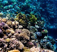 Red Sea 414  by Martin  Lidyard