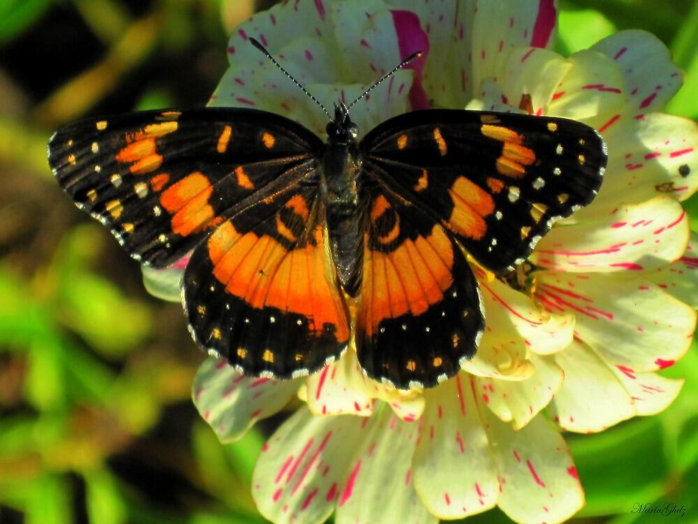 Fly by Maria Hernandez