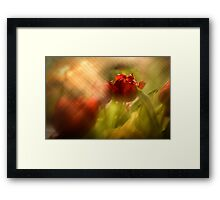 Tulip in the Spotlight Framed Print