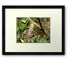 The art of camouflage.  Framed Print