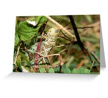 The art of camouflage.  Greeting Card