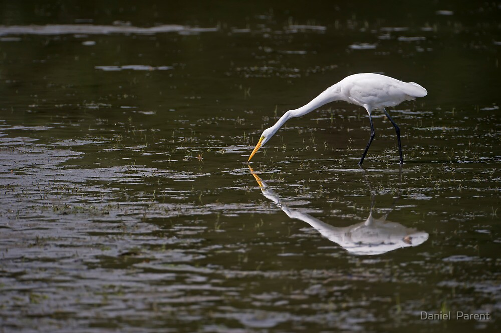 A paler shade of White by Daniel  Parent