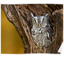 Eastern Screech Owl in stump Poster