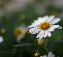 Daisies and Droplets by redsnapper205